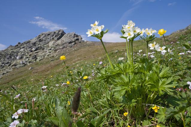 цветы и цветки Заповедник Южнo-Уральский